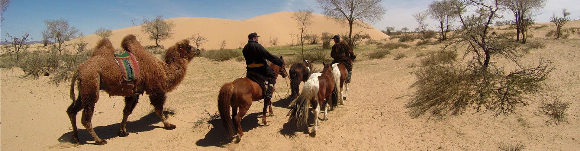 matériel d equitation de randonnée